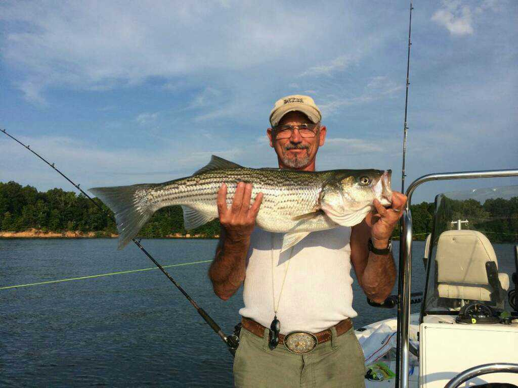 Tims Ford Rockfish