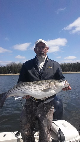 twenty pound Percy Priest rockfish